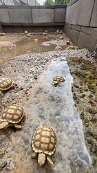 baby tortoises in enclosure.png