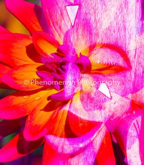 FLOWER POWER.jpg