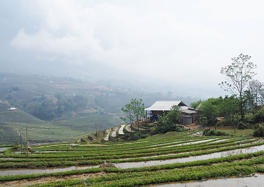 Vietnam Rice Terraces.jpg