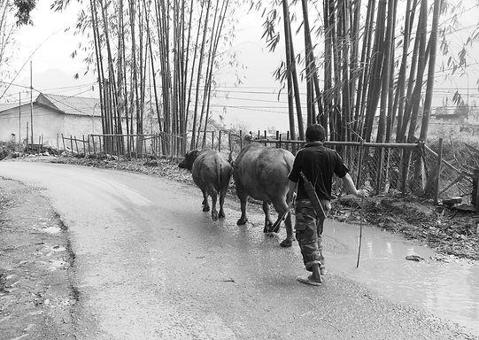 Vietnam farmer.jpg
