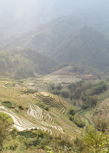A View Over Rice Terraces.jpg