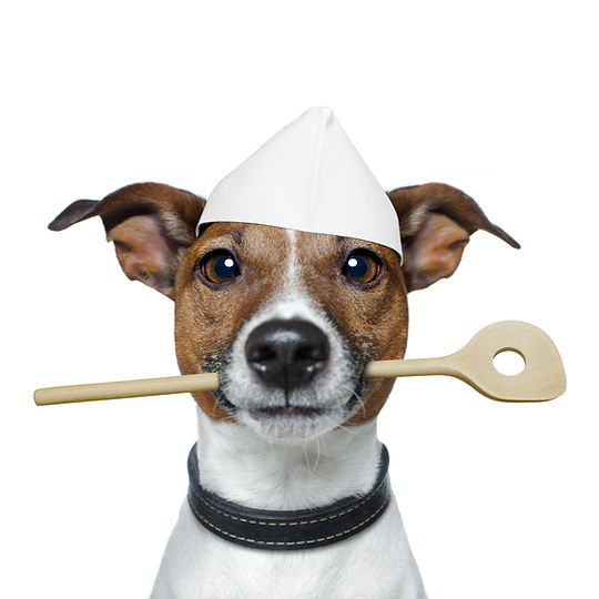 chef dog with cooking  spoon.jpg