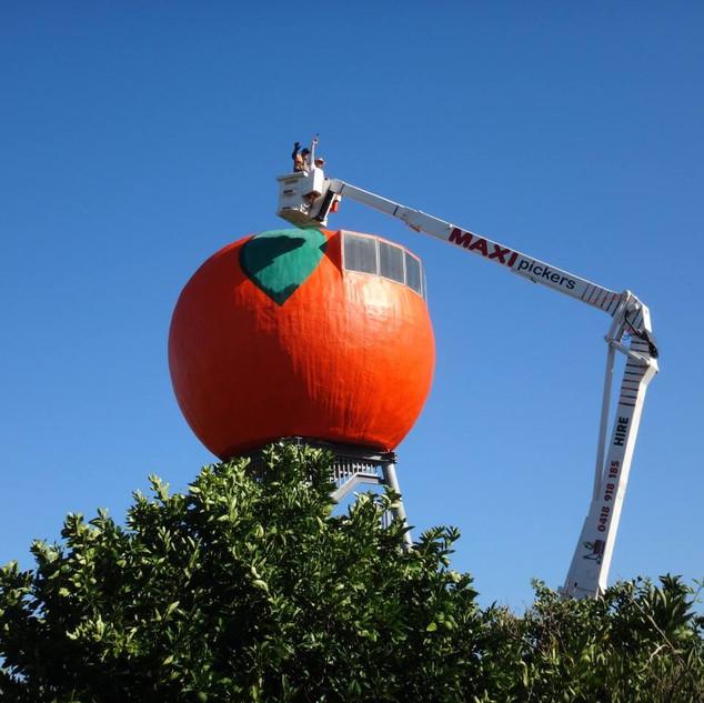 big orange pic.jpg