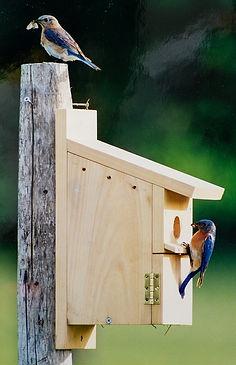 Audubon_edited.jpg