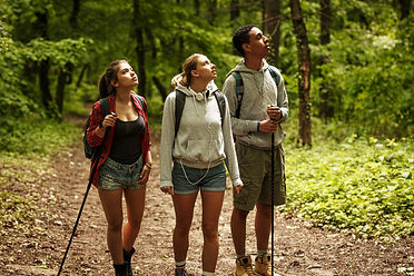 Group of young people hiking trough fore