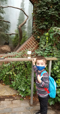 Trip to the zoo with H