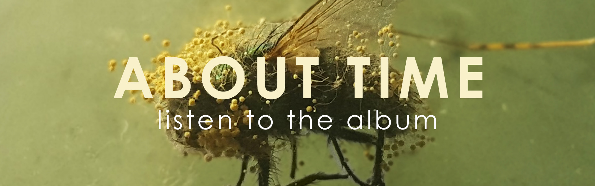 about time album button.jpg