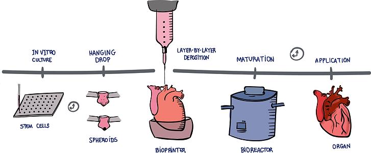 bioprintingFlow.png