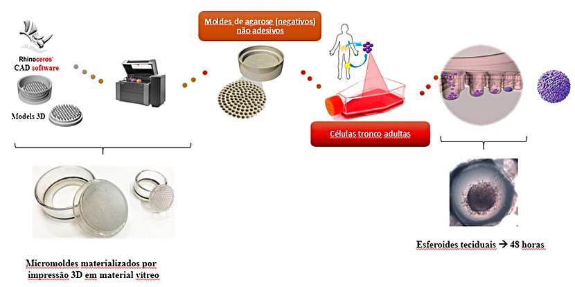 MODELAGEM 3D E FABRICAÇÃO DE MICROMOLDES PARA A PRODUÇÃO DE ESFEROIDES TECIDUAIS (AGLOMERADOS 3D DE CÉLULAS)