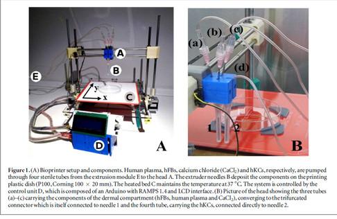 Bioimpressora 3D produz pele humana funcional