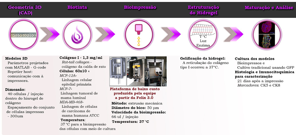 "Protocolo esquematizado do trabalho científico ""A 3D bioprinter platform for mechanistic analysis of tumoroids and chimeric mammary organoids"""