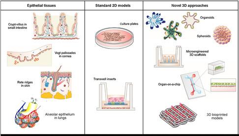 Como a bioimpressão pode acelerar as pesquisas sobre o SARS-CoV-2?