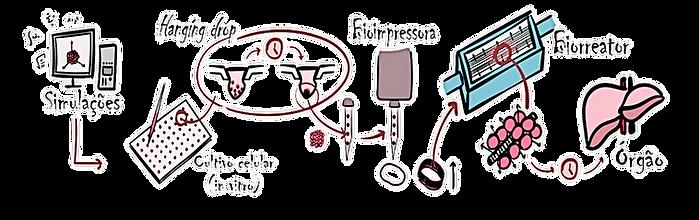 Etapas essenciais da biofabricação de um tecido ou órgão