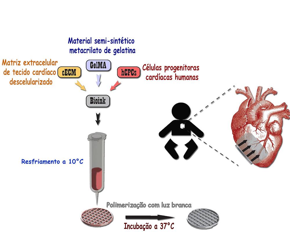 processo esquemático do trabalho realizado para a construção do enxerto cardíaco