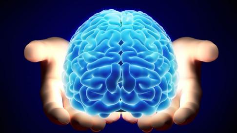 O uso da Bioimpressão na produção de Minicérebros