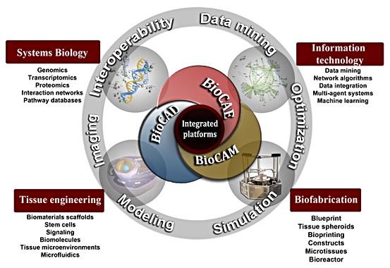 Integração e interoperabilidade de plataformas de Projetos (BioCAD), Simulação (BioCAE) e Manufatura (BioCAM) para a Biofabricação de Órgãos.