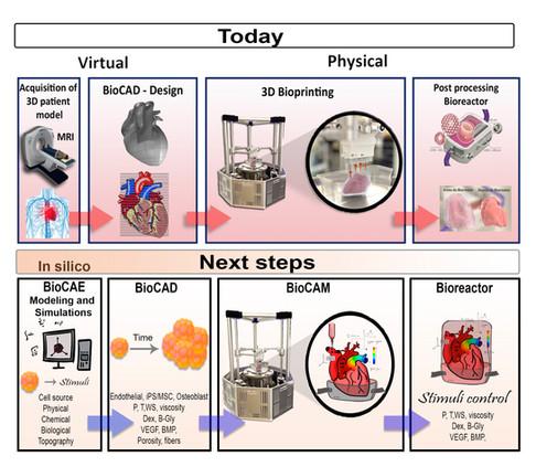 BioCAE - Simulação Computacional Biológica para o desenvolvimento de Bioprodutos e Bioprocessos visa