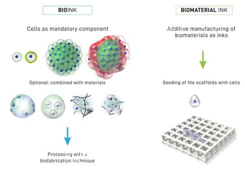 O que são Bioinks (biotintas)?                                      Conceitos importantes da Bioimpr