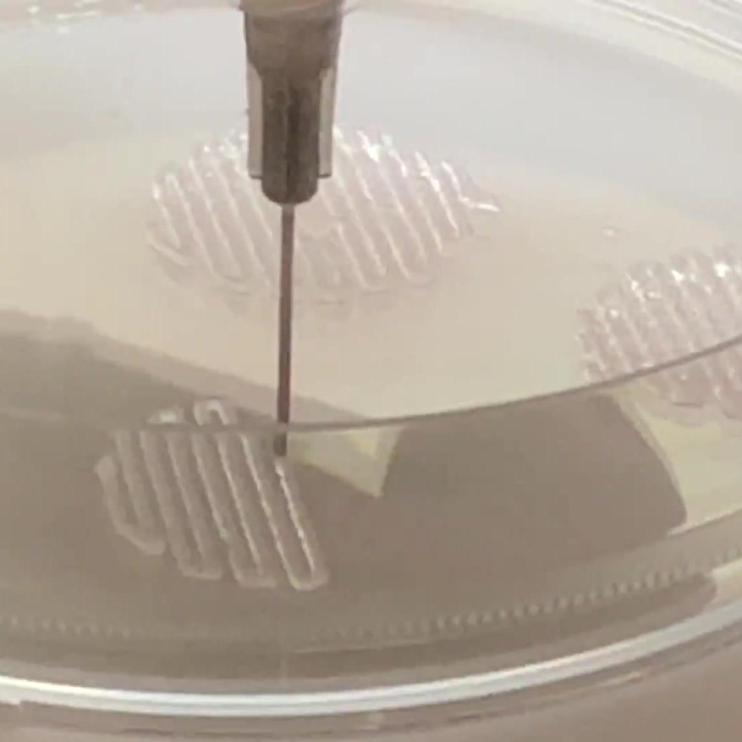 bioimpressão de fibroblastos