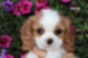 8-Winnie.jpg