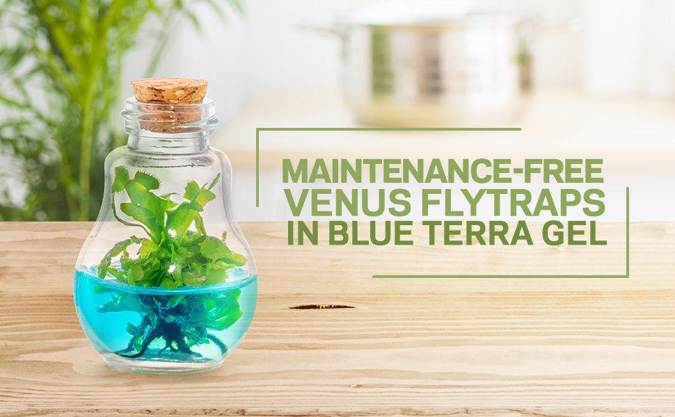 Venus Flytrap Jumbotron.jpg