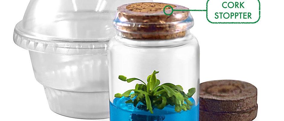 Venus Flytrap Terrarium Kit / DIY Starter, Perfect Gift for All Ages