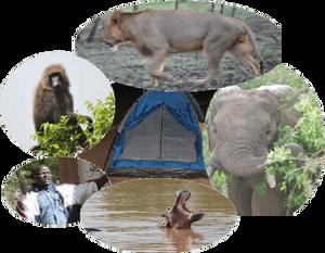 Parc national de la Pendjari, safari Bénin, safari Benin, Bénin safari, Benin safari