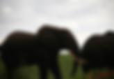 Elephant sette Cama.png