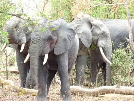 Découvrez les sites touristiques du nord du #Bénin