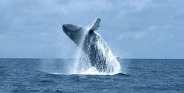 baleine.png