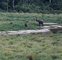 BAI LANGOUE ELEPHANT.png