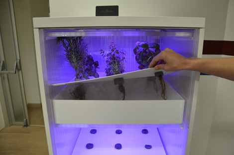 Aeroponics or Hydroponics for an indoor-garden – what are these technologies?