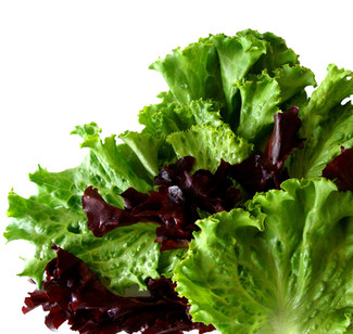 Don't buy washed and packed salad from the supermarket – better grow your own!