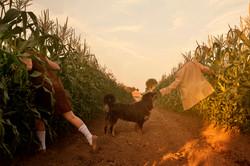 In the cornfields