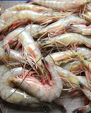 Shrimp-photo-Hymel-680x680.png