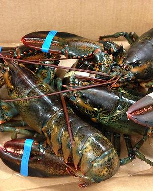 raw lobsters.jpg