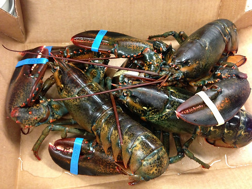 Whole Lobster