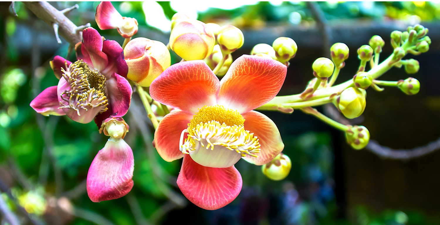 WIX Orchid