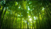 Bamboo: The Material That's Uniting the World