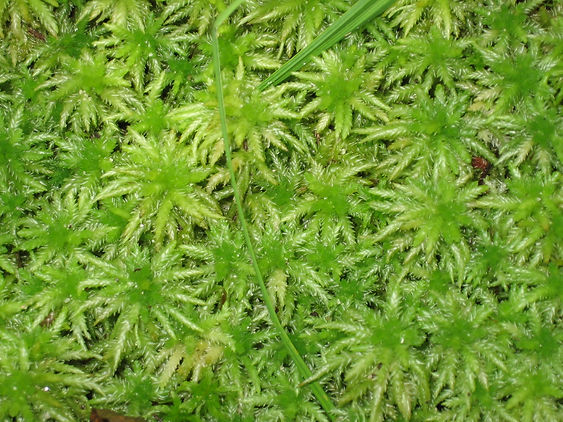 Moss Closeup.jpg