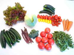 野菜ボックス 中身.jpg