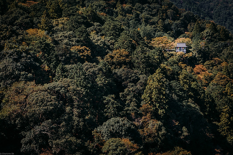 Charlotte Deckers Photography | Travel Photo Kyoto Japan | Cabin in Forest