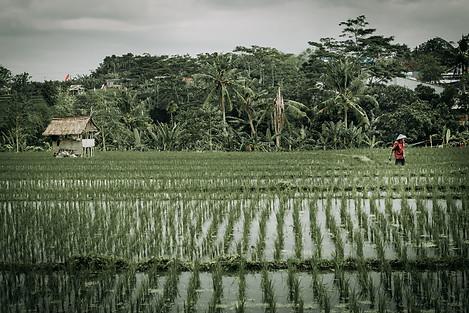 Charlotte Deckers Photography | Travel Photo Bali | Rainy Rice Terrace