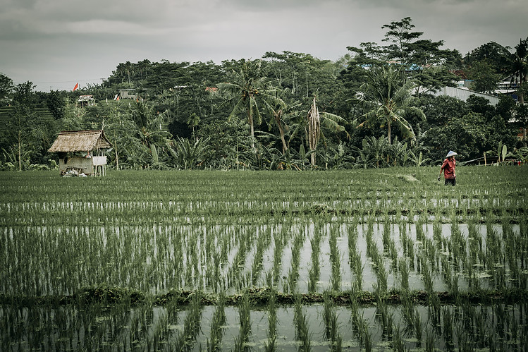 Charlotte Deckers Photography | Travel Photo Bali | Rainy Rice Terrace
