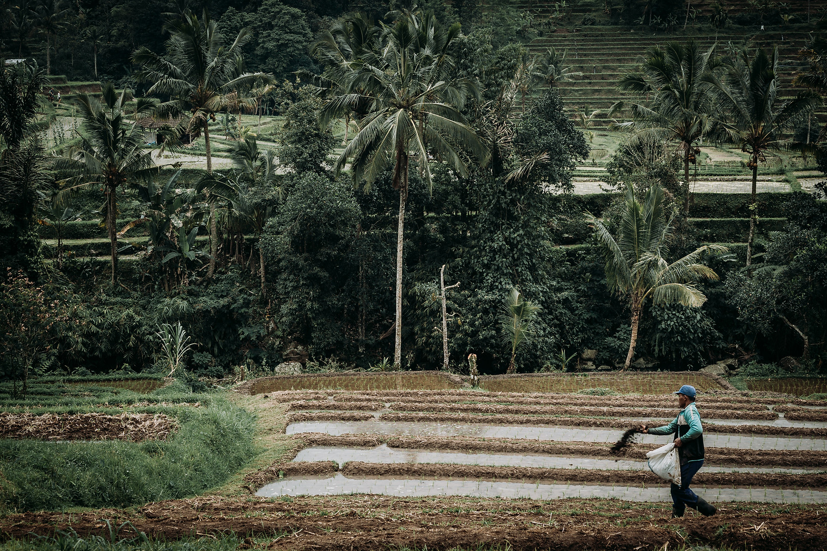 Charlotte Deckers Photography | Travel Photo Bali | Rice Terrace