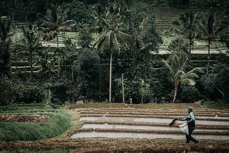 Charlotte Deckers Photography | Travel Photo Bali | Rice Terrace