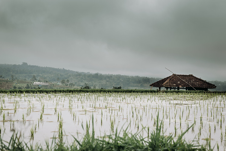 Charlotte Deckers Photography | Travel Photo Bali | Rainy Rice Terrace Cabine