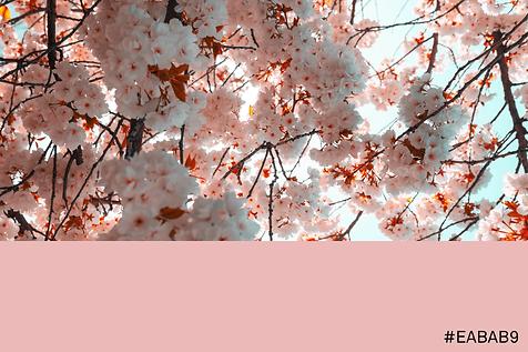 pexels-mitchell-henderson-2058853-min-mi