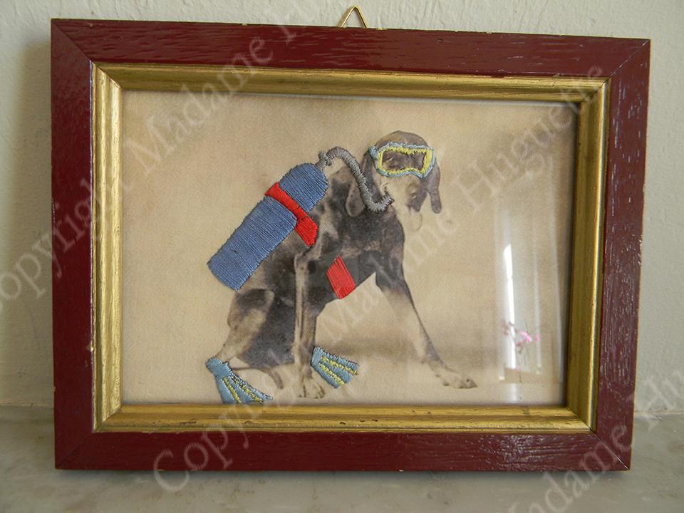 scuba_dog_copyright_deco_objets_insolites_décorations_idée_cadeau_cabinet_de_curiosités