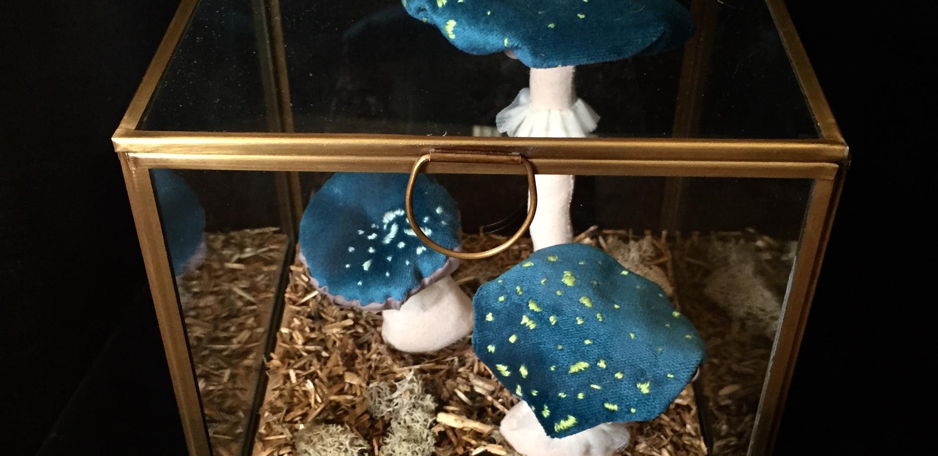 Champignons bleus